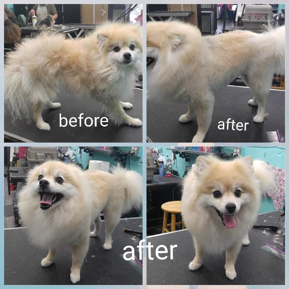 before and after dogs