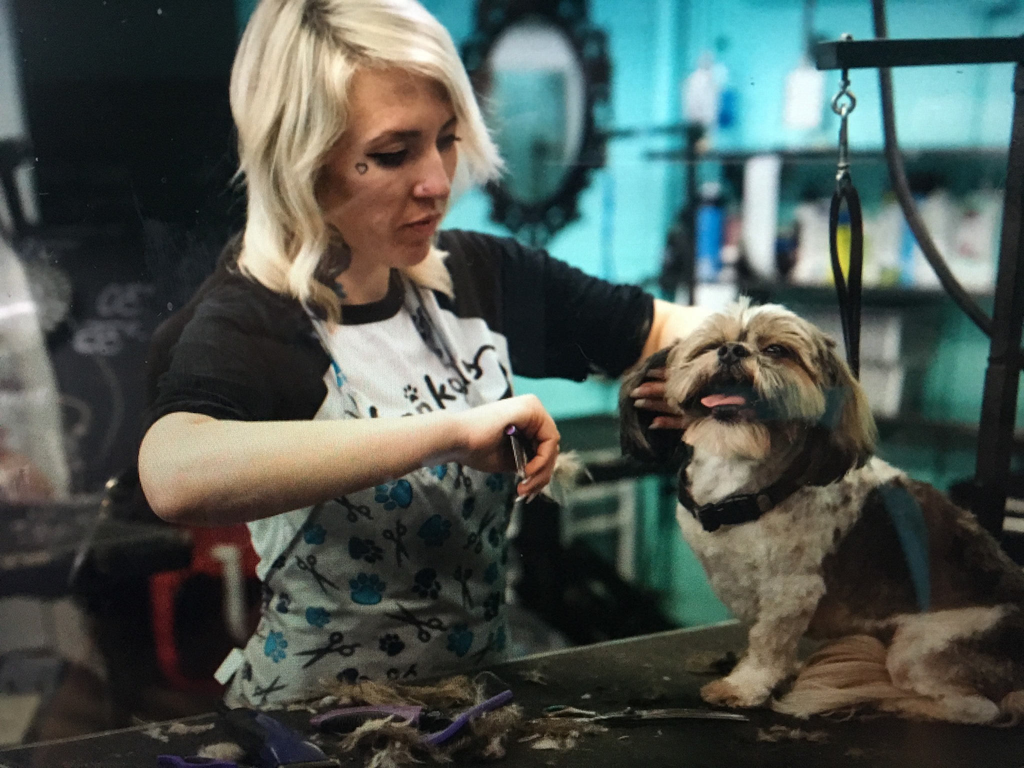 hair cut for happy dog