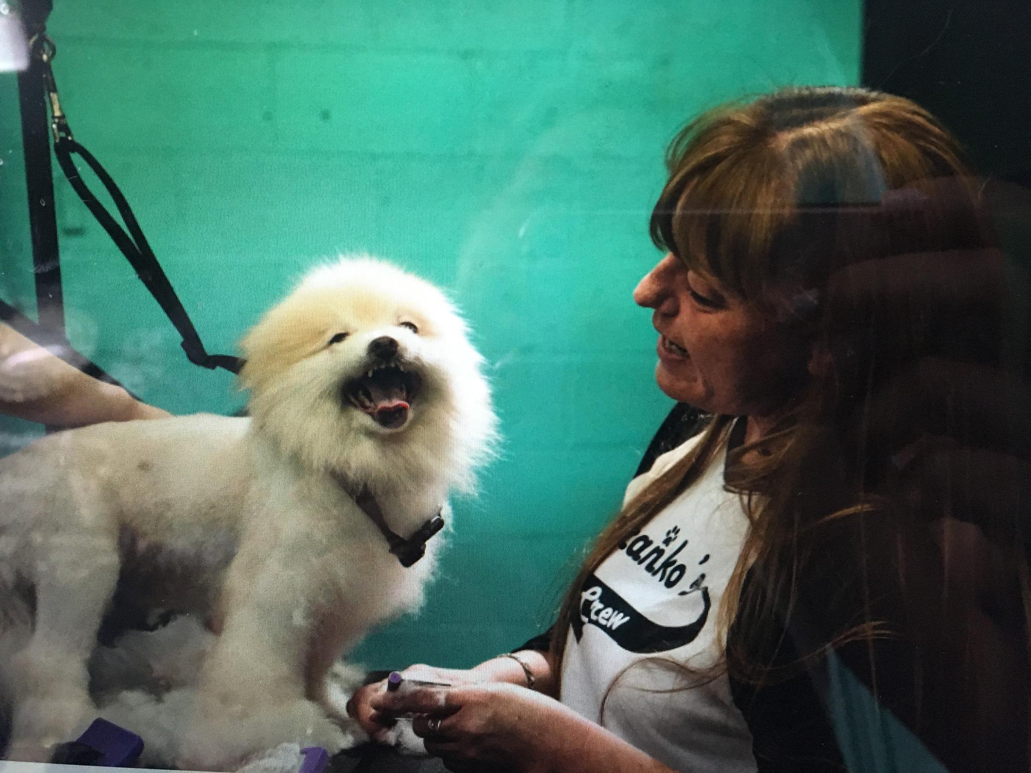 happy white dog